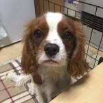 工房の看板犬